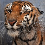 Richard Kocourek